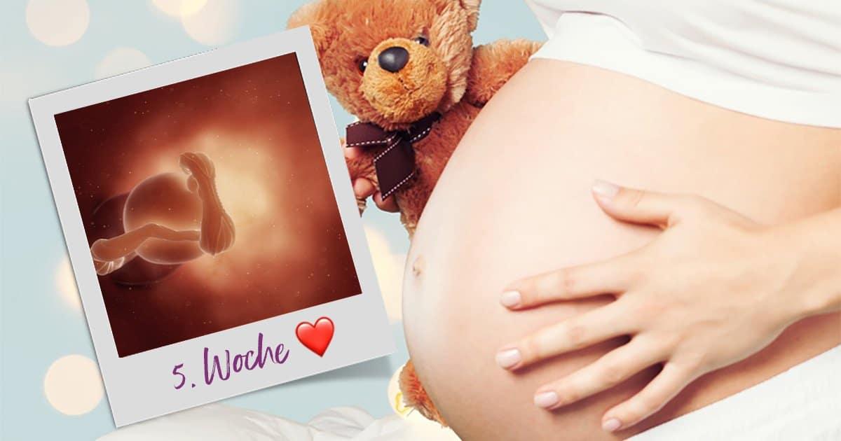 Quelle est la taille d'un embryon de 5 semaines?